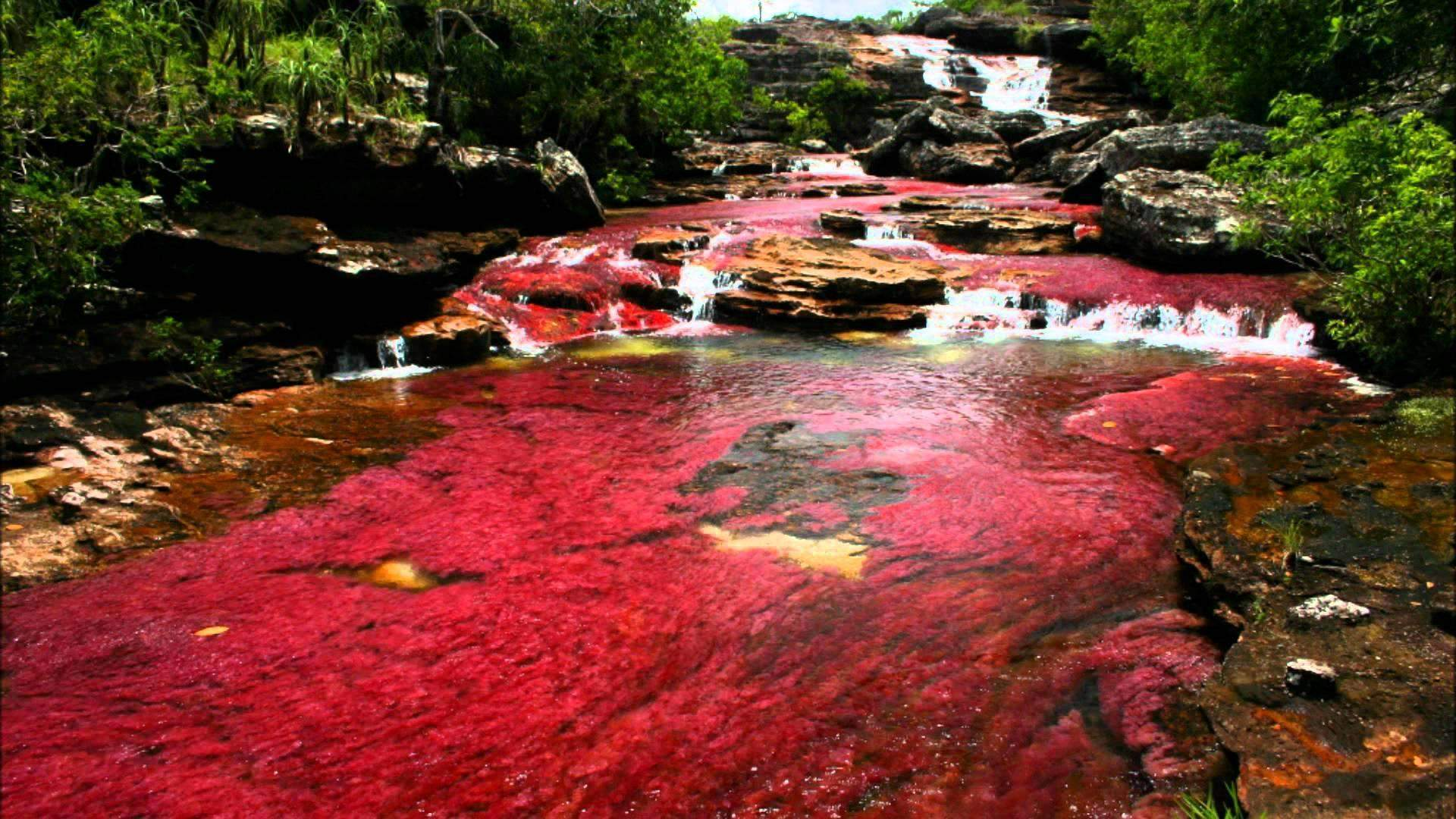 Ca o cristales the most beautiful river in the world - Cristales de colores ...