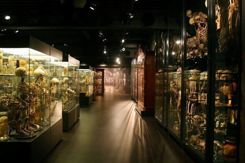 музей фролика в амстердаме фото