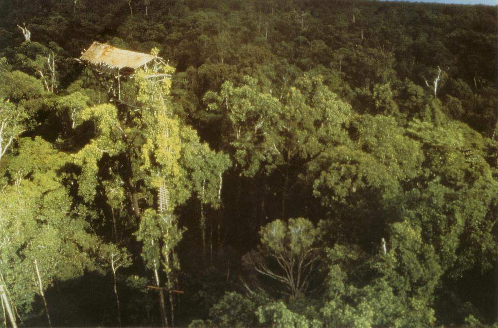 About Korowai tribe tree houses in Papua New Guinea and Indonesia